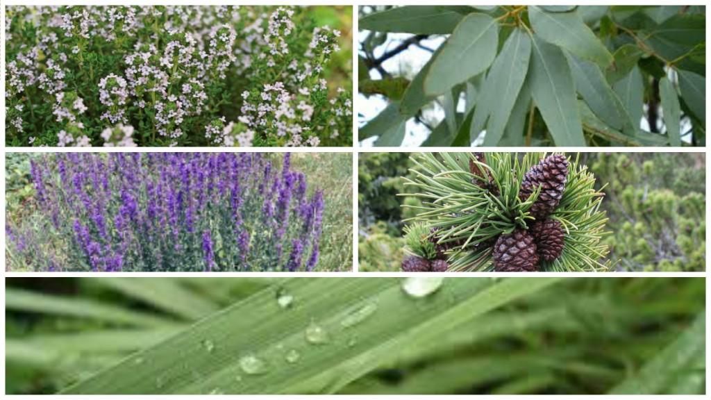 aceites-esenciales-plantas