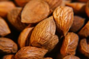 semillas-del-albaricoque