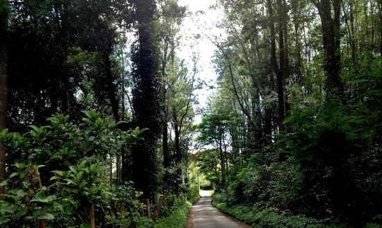 Bosques de Sirumalai