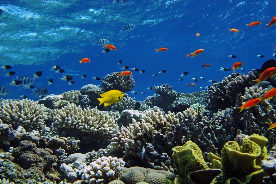 fondo del mar con pece