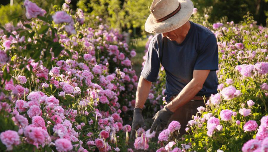 Campo de flores Labiatae